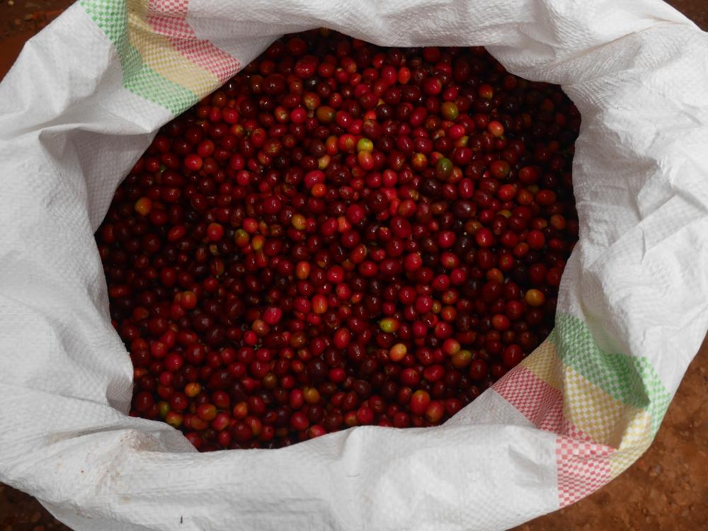 Musasa Cherries